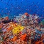 Colorful Raja Ampat Diving