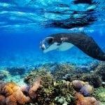 Raja Ampat Diving with Manta