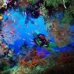 Raja Ampat Diving Trip