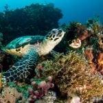 Raja Ampat Diving with Turtle
