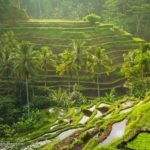 Tegalalang Rice Fields Bali