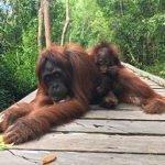Orangutan Tour Borneo