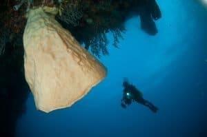 Gorontalo Diving Tour